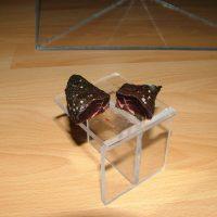 Versuchsende - Fleisch unter der rechten Pyramide