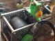 Lüling Magnetmotor mit Pneumatik
